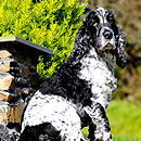 Animal Family Dog